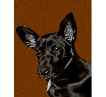 I Hear Ya! Portrait of a Little Black Dog. Photographic Print