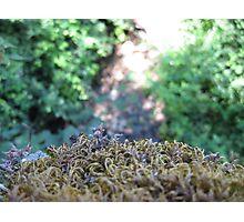 lichens Photographic Print