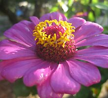 Glossy flower 2 by mdagis