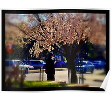 Spring Pear Blossoms Poster
