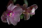 Pink Cactus Flower by Deborah McGrath