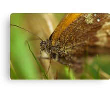 Pyronia Tithonus Canvas Print