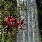 Milla Milla Falls  by Daniel  Archer