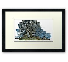 My Sycamore Framed Print