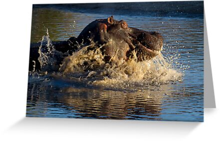 Unhappy Hippo by Michael  Moss