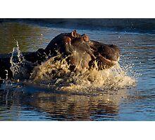 Unhappy Hippo Photographic Print