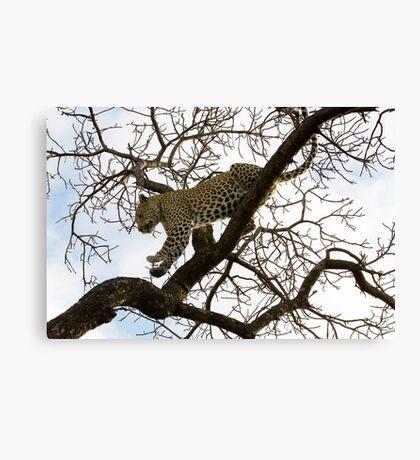 Carefully I Jump ! Canvas Print