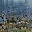 Oak with Ash, below Scobull, Isle of Mull by cuilcreations