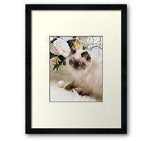 Kitty's Playtime Framed Print