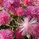 Pink flowers by Skye Hohmann