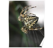 Back Pattern, Garden Spider Poster