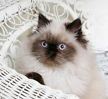 Kitten Portrait by CrowningGlory