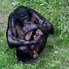 Thumbsucking macho? by Gili Orr