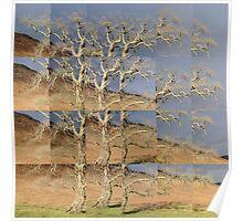 Gnarled Oak, Ardnamurchan Poster