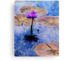 Lavender Waterlily Canvas Print