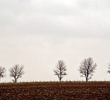 Five trees by Gary Rayner