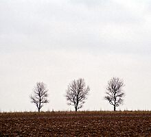 Three trees by Gary Rayner
