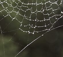 Dew drops on a web (2) by Penny V-P