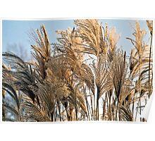 Ornamental grasses Poster