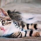 little kitty.. by Michelle McMahon