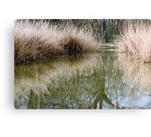 Reed bed reflection Metal Print