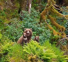 Grizzly Bears in a Rain Forest by Tim Grams