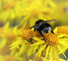 Busy Bee by Sarah Cowan