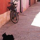 Alone in Burano by daphsam