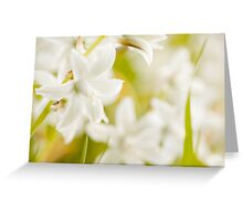 Ornithogalum nutans white flowers detail  Greeting Card