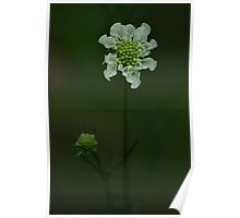 Wild flower of forest Poster