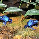 Froggies so Blue by T. Thornton