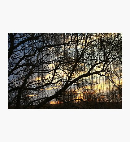 Willow SUnrise Photographic Print