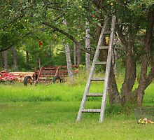Climb Up My Apple Tree by by M LaCroix