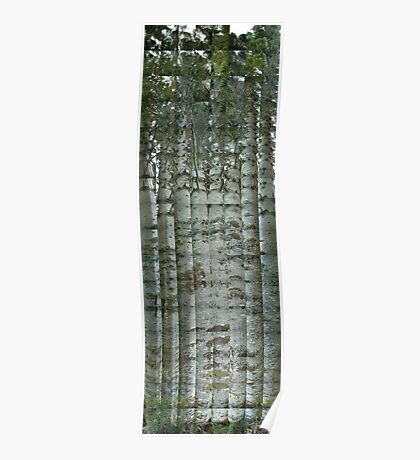Spruce Trunk Poster