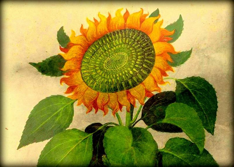 Gorgeous Vintage Botanical Sunflower by Debbie Robbins