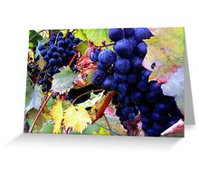 The Grape that Makes the Vino Greeting Card