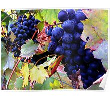 The Grape that Makes the Vino Poster