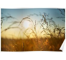 Capturing the Summer Sun Poster