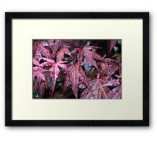 Red Droplet's Framed Print