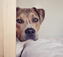 Not too smart dog trapped behind the wardrobe door by ruthlessphotos