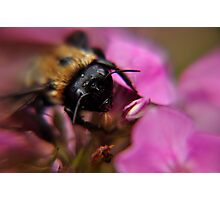bee on a flower after a rain at kingwood center Photographic Print