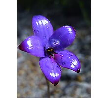 Enamel Orchid - WA Photographic Print