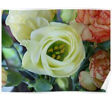 Flower Photographic Image Poster