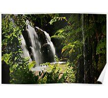 Rainforest View Poster