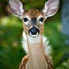 Bright Eyed & Bushy Tailed by Scott Denny