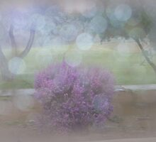 Rainy Day by Lucinda Walter