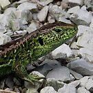 Sand Lizard by SophiaDeLuna