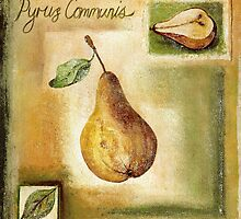Pyrus Communis by tiffanybudd