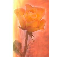 Flaming Rose Photographic Print