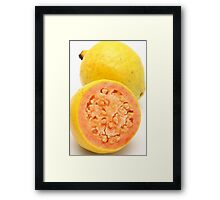 Guava fruits Framed Print